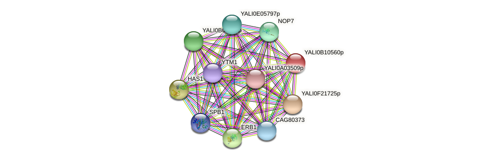 XP_500726.1 protein (Yarrowia lipolytica) - STRING interaction network