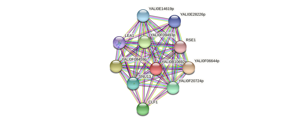 XP_500730.2 protein (Yarrowia lipolytica) - STRING interaction network