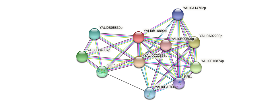 XP_500737.1 protein (Yarrowia lipolytica) - STRING interaction network