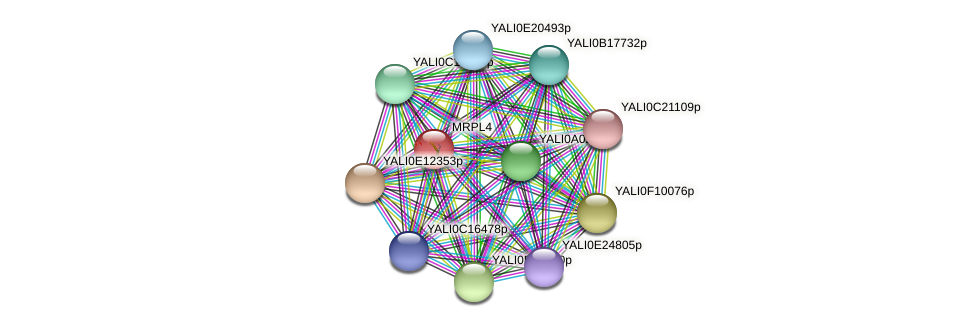 MRPL4 protein (Yarrowia lipolytica) - STRING interaction network