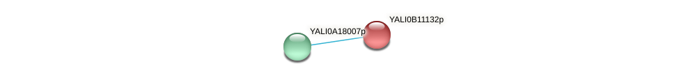 XP_500747.2 protein (Yarrowia lipolytica) - STRING interaction network
