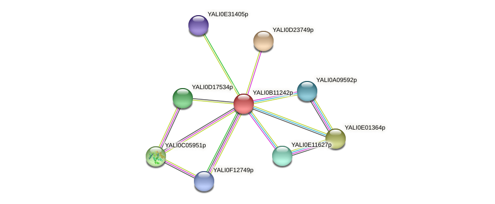 XP_500751.1 protein (Yarrowia lipolytica) - STRING interaction network
