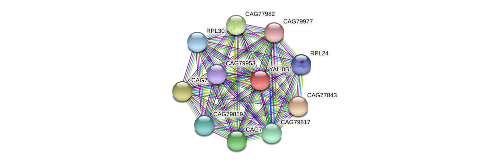 XP_500754.2 protein (Yarrowia lipolytica) - STRING interaction network