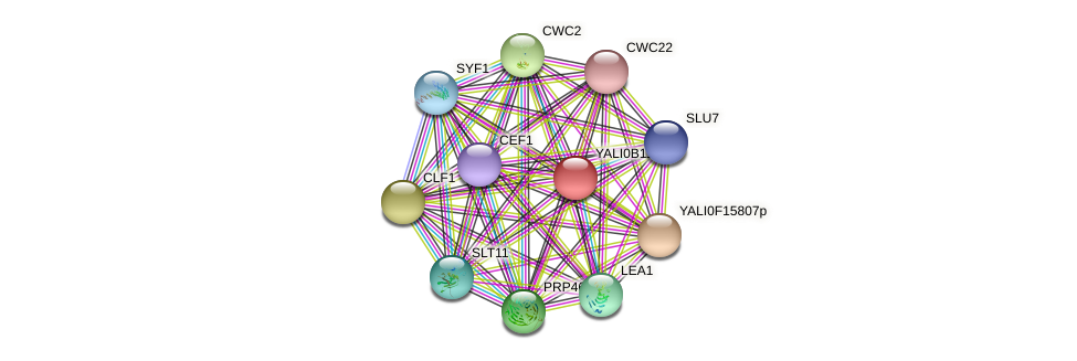 XP_500756.1 protein (Yarrowia lipolytica) - STRING interaction network