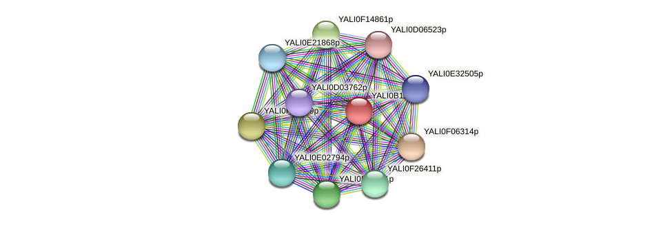 XP_500757.1 protein (Yarrowia lipolytica) - STRING interaction network