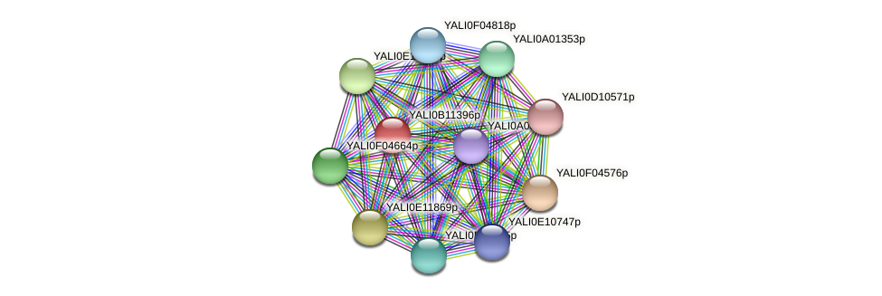 XP_500758.1 protein (Yarrowia lipolytica) - STRING interaction network