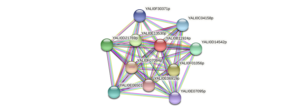 XP_500780.1 protein (Yarrowia lipolytica) - STRING interaction network