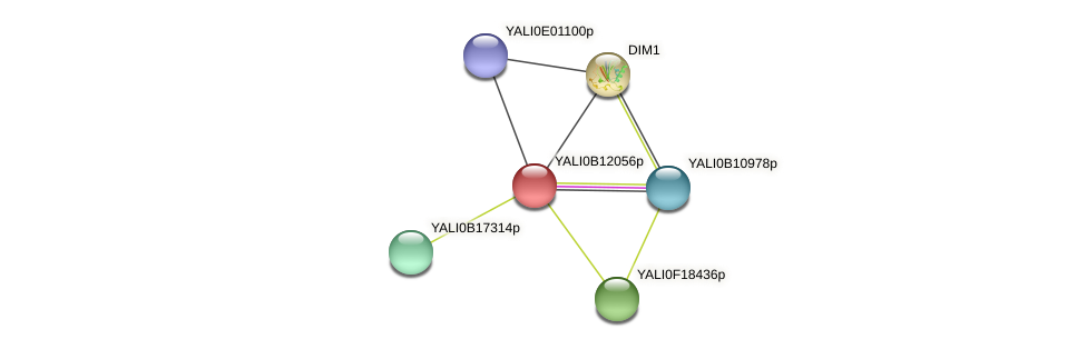 XP_500784.1 protein (Yarrowia lipolytica) - STRING interaction network