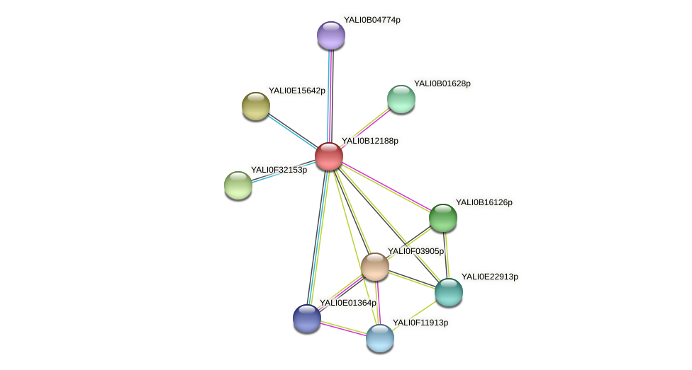 XP_500789.1 protein (Yarrowia lipolytica) - STRING interaction network