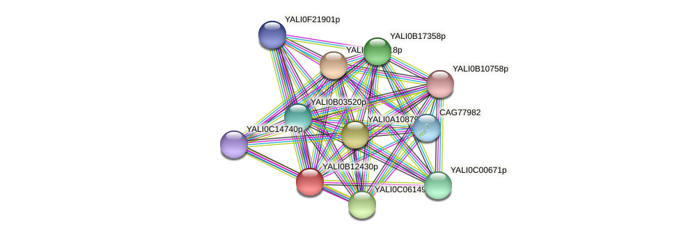 XP_500800.1 protein (Yarrowia lipolytica) - STRING interaction network