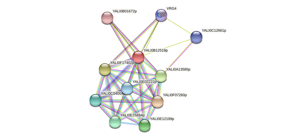 XP_500804.1 protein (Yarrowia lipolytica) - STRING interaction network