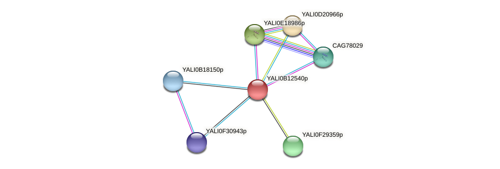 XP_500805.1 protein (Yarrowia lipolytica) - STRING interaction network