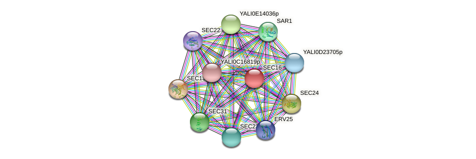 SEC16 protein (Yarrowia lipolytica) - STRING interaction network