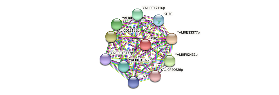 PIF1 protein (Yarrowia lipolytica) - STRING interaction network