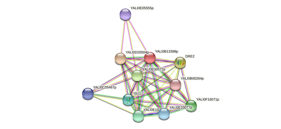 XP_500838.1 protein (Yarrowia lipolytica) - STRING interaction network