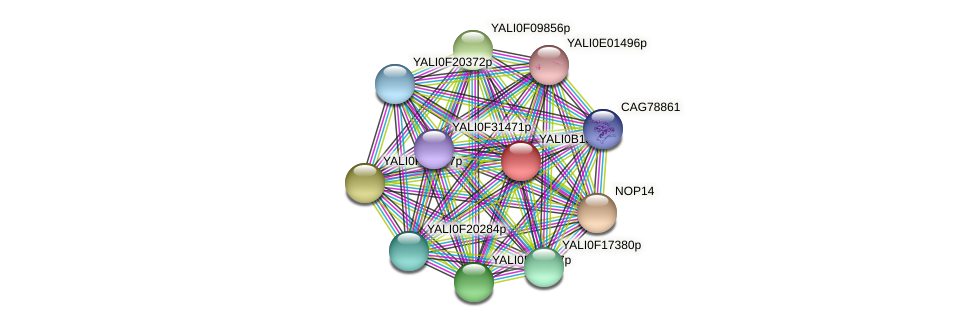 XP_500840.1 protein (Yarrowia lipolytica) - STRING interaction network