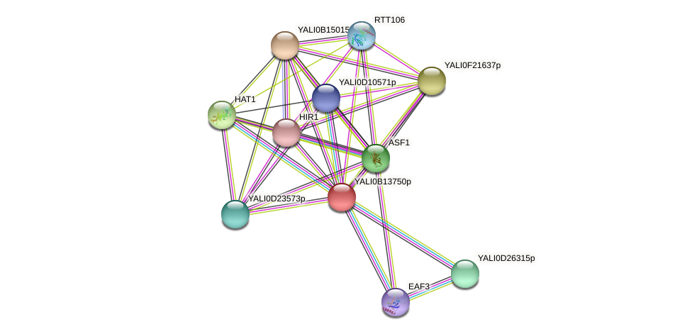 XP_500852.1 protein (Yarrowia lipolytica) - STRING interaction network