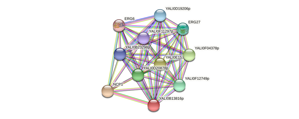 XP_500855.1 protein (Yarrowia lipolytica) - STRING interaction network
