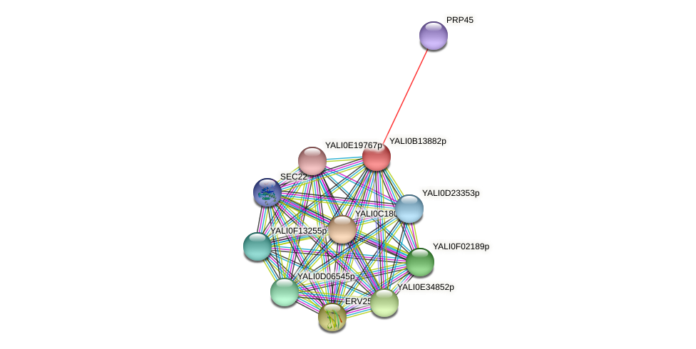 XP_500858.1 protein (Yarrowia lipolytica) - STRING interaction network