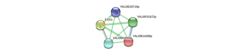 XP_500877.1 protein (Yarrowia lipolytica) - STRING interaction network