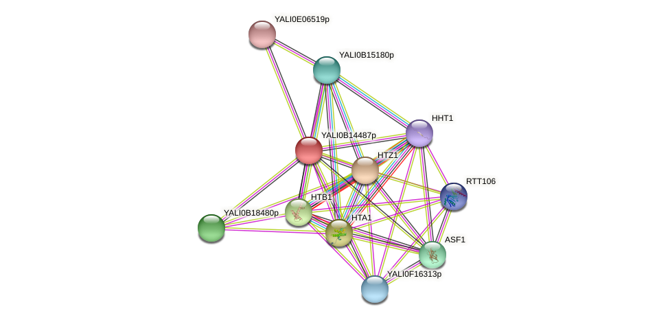 XP_500886.1 protein (Yarrowia lipolytica) - STRING interaction network