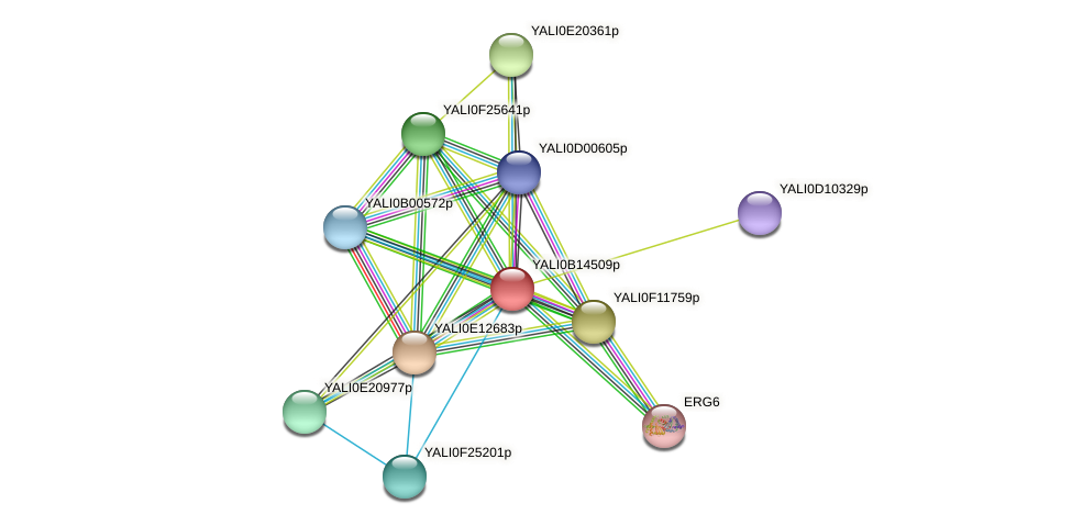 XP_500887.1 protein (Yarrowia lipolytica) - STRING interaction network