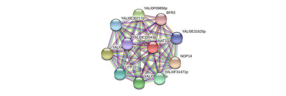 XP_500898.1 protein (Yarrowia lipolytica) - STRING interaction network