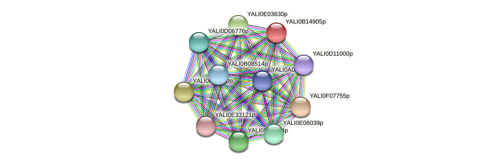 XP_500905.1 protein (Yarrowia lipolytica) - STRING interaction network