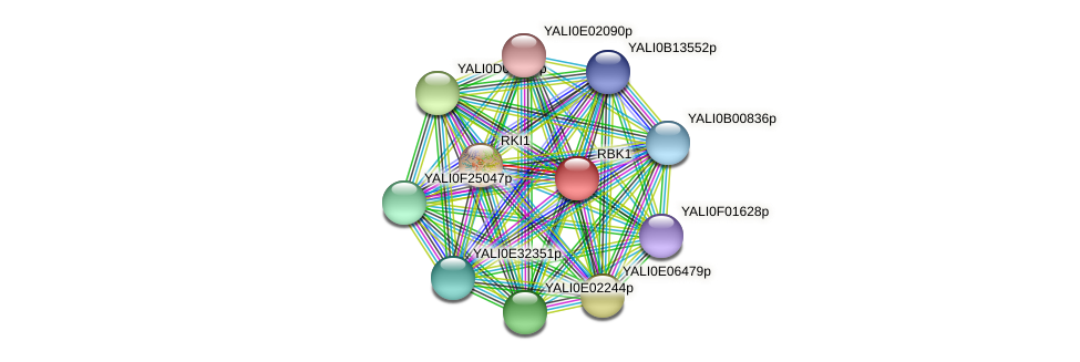 XP_500906.1 protein (Yarrowia lipolytica) - STRING interaction network