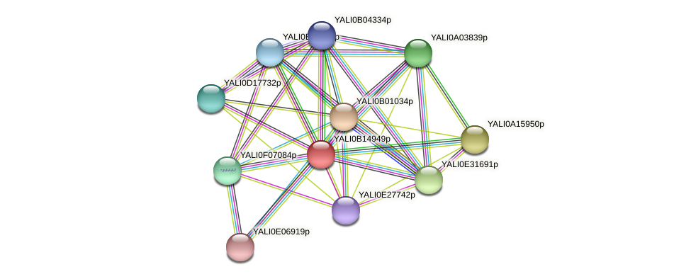 XP_500907.2 protein (Yarrowia lipolytica) - STRING interaction network