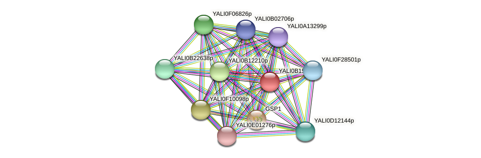 XP_500913.1 protein (Yarrowia lipolytica) - STRING interaction network
