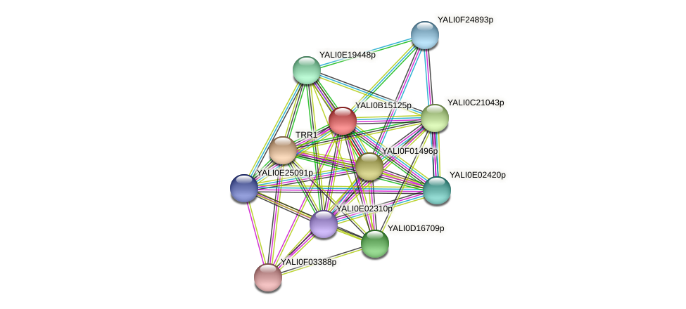 XP_500915.1 protein (Yarrowia lipolytica) - STRING interaction network
