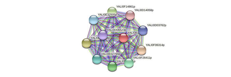 XP_500920.1 protein (Yarrowia lipolytica) - STRING interaction network