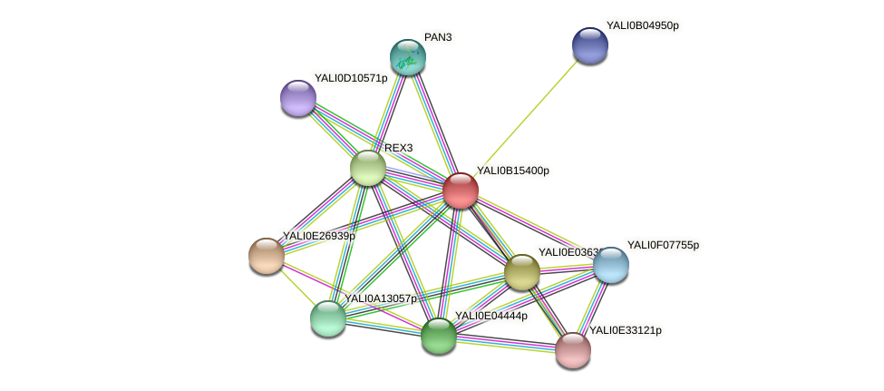 XP_500929.1 protein (Yarrowia lipolytica) - STRING interaction network