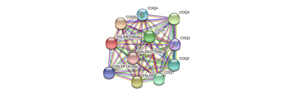 XP_500941.1 protein (Yarrowia lipolytica) - STRING interaction network