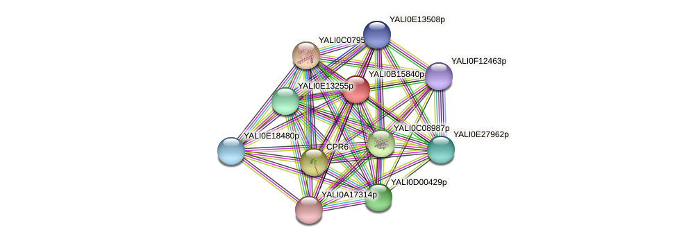 XP_500948.1 protein (Yarrowia lipolytica) - STRING interaction network
