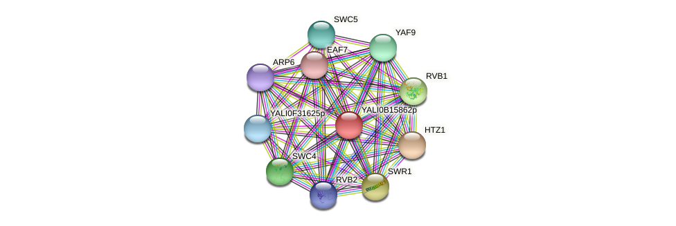 XP_500949.1 protein (Yarrowia lipolytica) - STRING interaction network