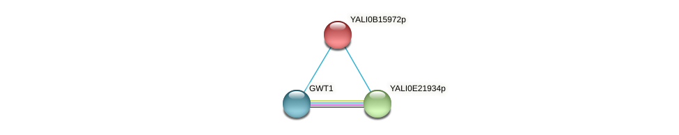 XP_500953.1 protein (Yarrowia lipolytica) - STRING interaction network