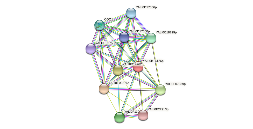 XP_500960.1 protein (Yarrowia lipolytica) - STRING interaction network