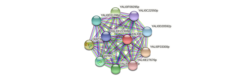 XP_500966.1 protein (Yarrowia lipolytica) - STRING interaction network