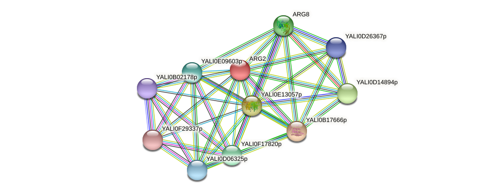 ARG2 protein (Yarrowia lipolytica) - STRING interaction network