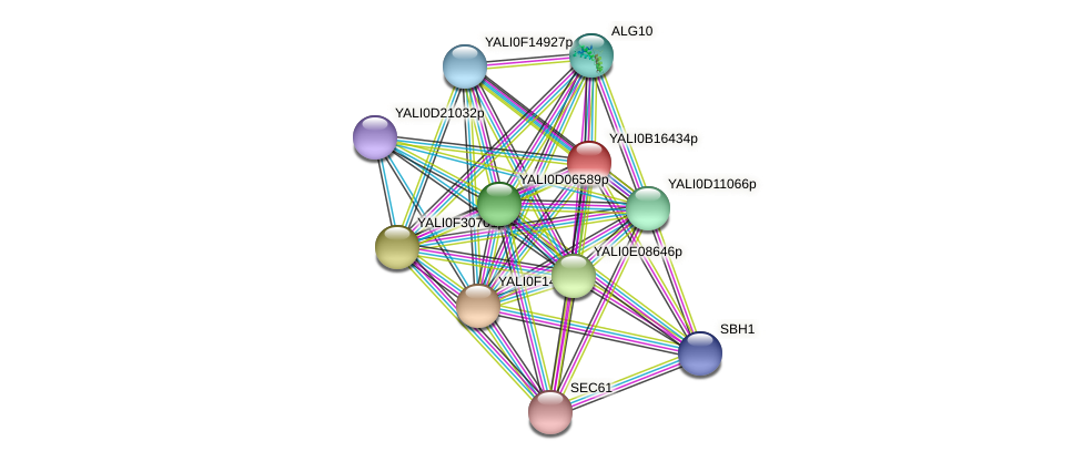 XP_500973.1 protein (Yarrowia lipolytica) - STRING interaction network