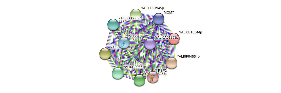 XP_500978.1 protein (Yarrowia lipolytica) - STRING interaction network