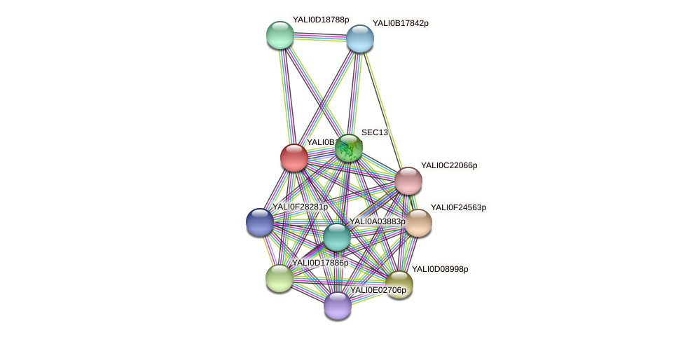 XP_500981.1 protein (Yarrowia lipolytica) - STRING interaction network