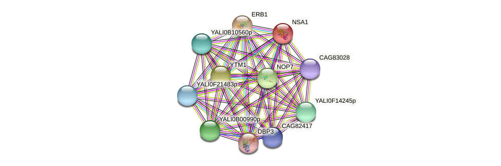 NSA1 protein (Yarrowia lipolytica) - STRING interaction network