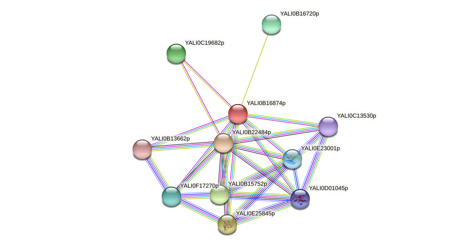 XP_500993.1 protein (Yarrowia lipolytica) - STRING interaction network