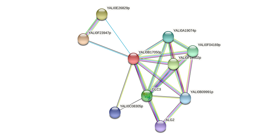 XP_501001.1 protein (Yarrowia lipolytica) - STRING interaction network