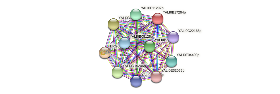 XP_501006.1 protein (Yarrowia lipolytica) - STRING interaction network
