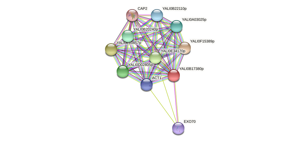 XP_501014.1 protein (Yarrowia lipolytica) - STRING interaction network