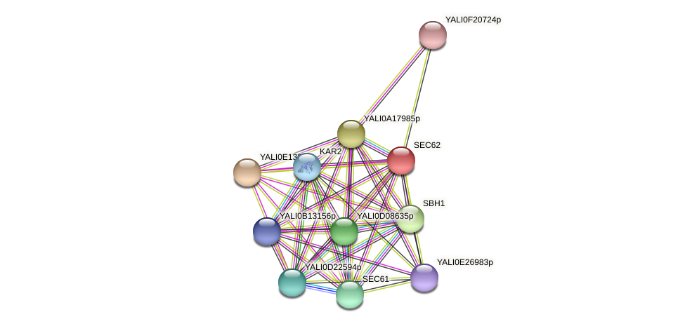 SEC62 protein (Yarrowia lipolytica) - STRING interaction network